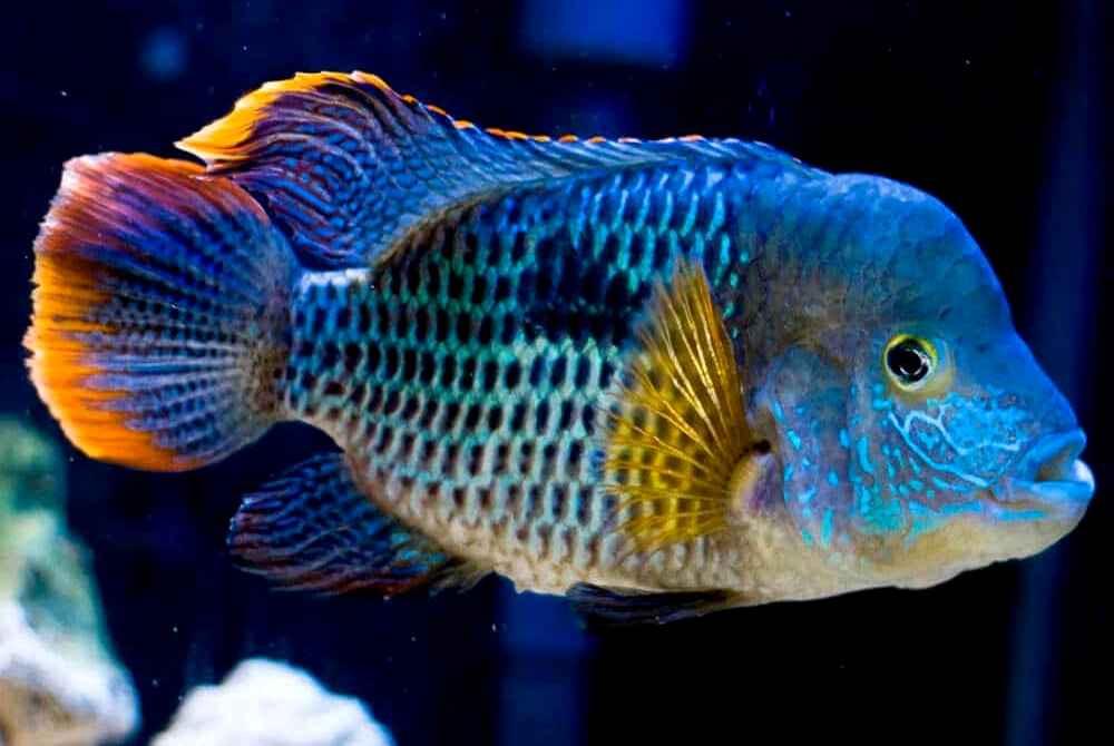 primer ryba v akvariume